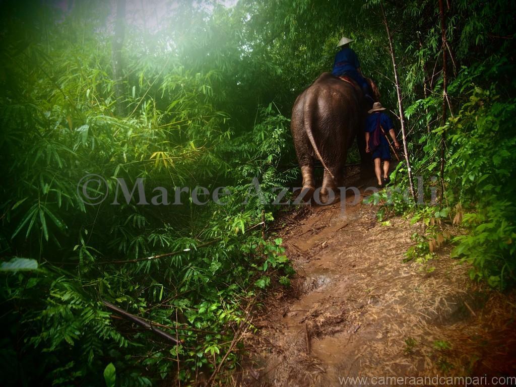 Four Seasons Tented Camp-  elephant jungle trek