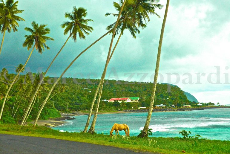 Samoa coastline with palm trees and pony